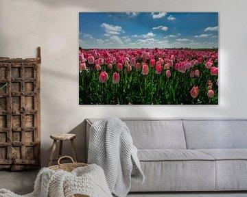 Bollenstreek - roze tulpen - Nederland van Jeroen(JAC) de Jong