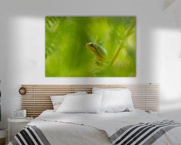 Grenouille arboricole en vert sur Marianne Jonkman
