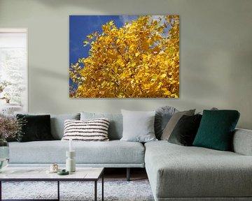 Herfstfoto met geel blad van Pieter Korstanje