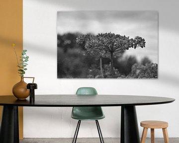 Bloem in zwart-wit van Louis Kreuk