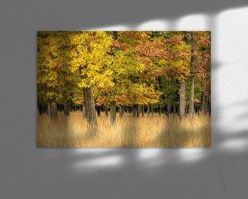 Landschap met herfstkleuren van mike van schoonderwalt