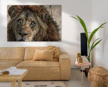 Lion King van Guus Quaedvlieg