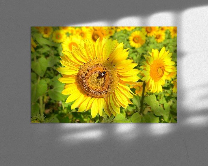Impression: Zonnebloemen in de Dordogne sur 7Horses Photography