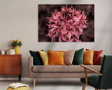 Roze bloem von Stedom Fotografie