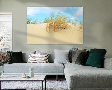 Helmet grass in sand dunes von 7Horses Photography