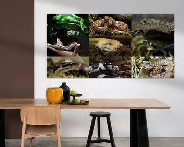 Schlangen-Collage van Ingo Rasch