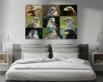 Greifvögel_Collage van Ingo Rasch