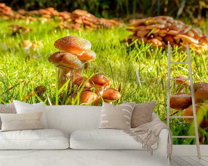 Impression: Paddestoelen in mijn tuin, honingzwam sur 7Horses Photography