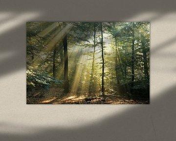 Bos in goud ll van Rigo Meens