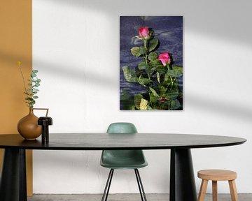 Rote Rosen im Wasser von Christine Nöhmeier