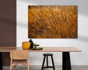 Gouden Ochtend II von Marc Smits