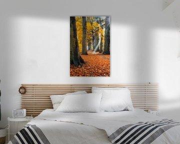 Zonnestralen en laantje in herfstkleuren van Jenco van Zalk