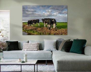 Koeien in het Land van Jaap Terpstra