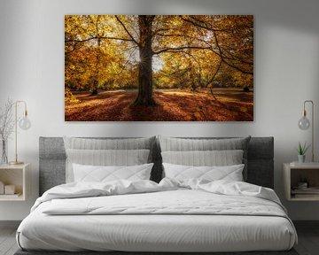 Gouden herfstkleuren van Edwin Mooijaart