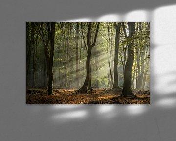 Herfst Nevel in het Speulderbos