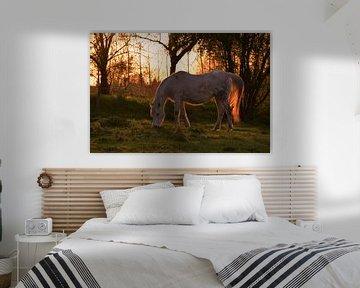 Paard in de avondzon van Maarten Honinx