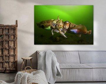 Parende Zeekatten van Filip Staes