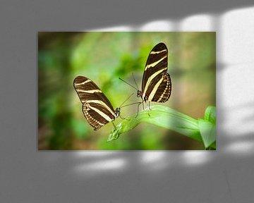 Zebravlinders zittend op een blad van Chris Stenger