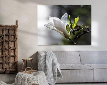 Spring in white von Maartje Kuperus