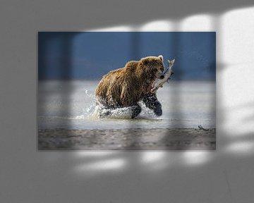Hunting Bear von Riccardo Marchegiani