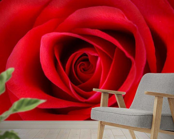 Beispiel fototapete: Rode roos von John Groen