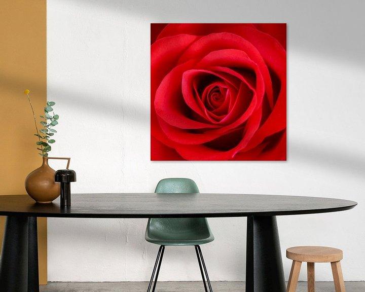 Beispiel: Rode roos von John Groen