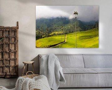 Hunderte gigantischen Wachspalmen, im Nationalpark Valle de Cocora, Kolumbien von Bart van Eijden