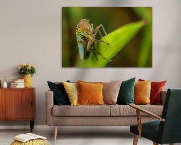 Cicade op blad sur Amanda Blom