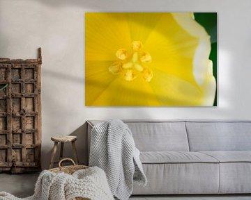 Tulp von John Groen
