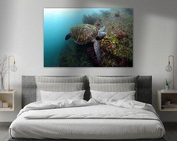 Schildpad von Jaap Voets