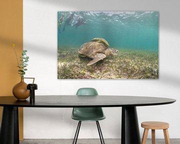 Schildpad van Jaap Voets