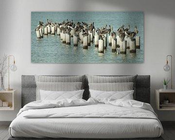 Pelikanen van Jaap Voets