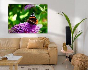 Vlinder Atalanta van Merel de Ling