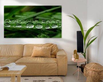 Waterdruppels op blad van Natasja Martijn