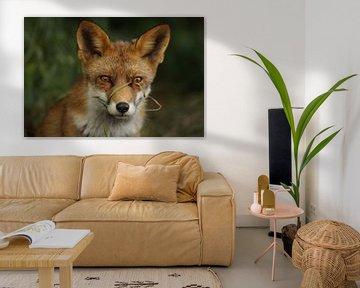 Vos / fox van Jan Katsman