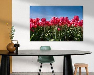 Roze tulpen van Ad Jekel