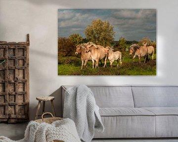 Paarden  van Natasja Martijn