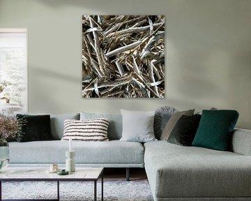structure in driftwood 007w van Jeroen van der Meij