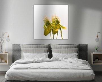 Flower Orchidea Quartet von Greetje van Son