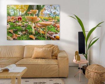 Boden im Wald mit Blättern und Pilzen in der Herbst Saison von Ben Schonewille