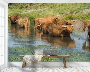 Schotse Hooglanders van Barbara Brolsma
