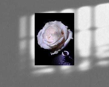 romantic van Jonathan Kremer