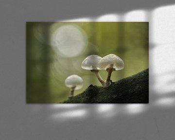 Dwaallichtjes in het bos