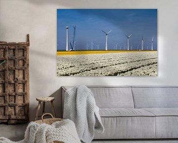 Tulpen veld, wit en gele tulpen van Ad Jekel