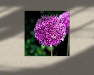 lila Blume sur Artstudio1622