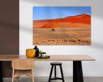 Overleven in Namib woestijn