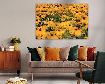 yellow van René van Proosdij