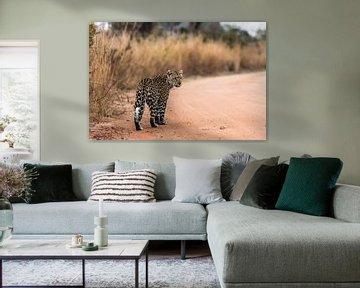 Luipaard - Panthera pardus