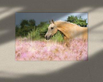 Pferd im rosa Heidekraut von Yvette Baur