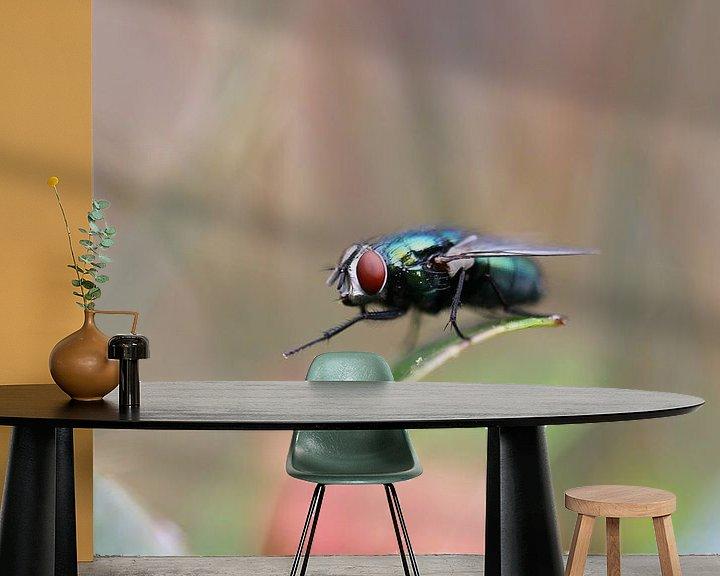 Impression: La mouche en gros plan sur Paul Franke